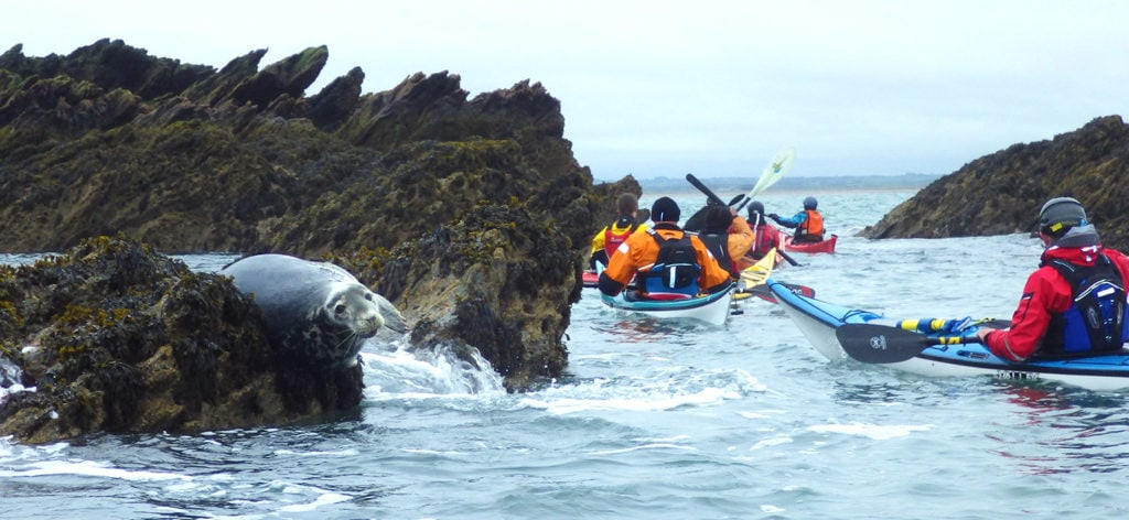 What to wear sea kayaking with a seal.