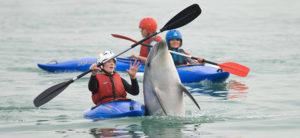 wildlife when paddling