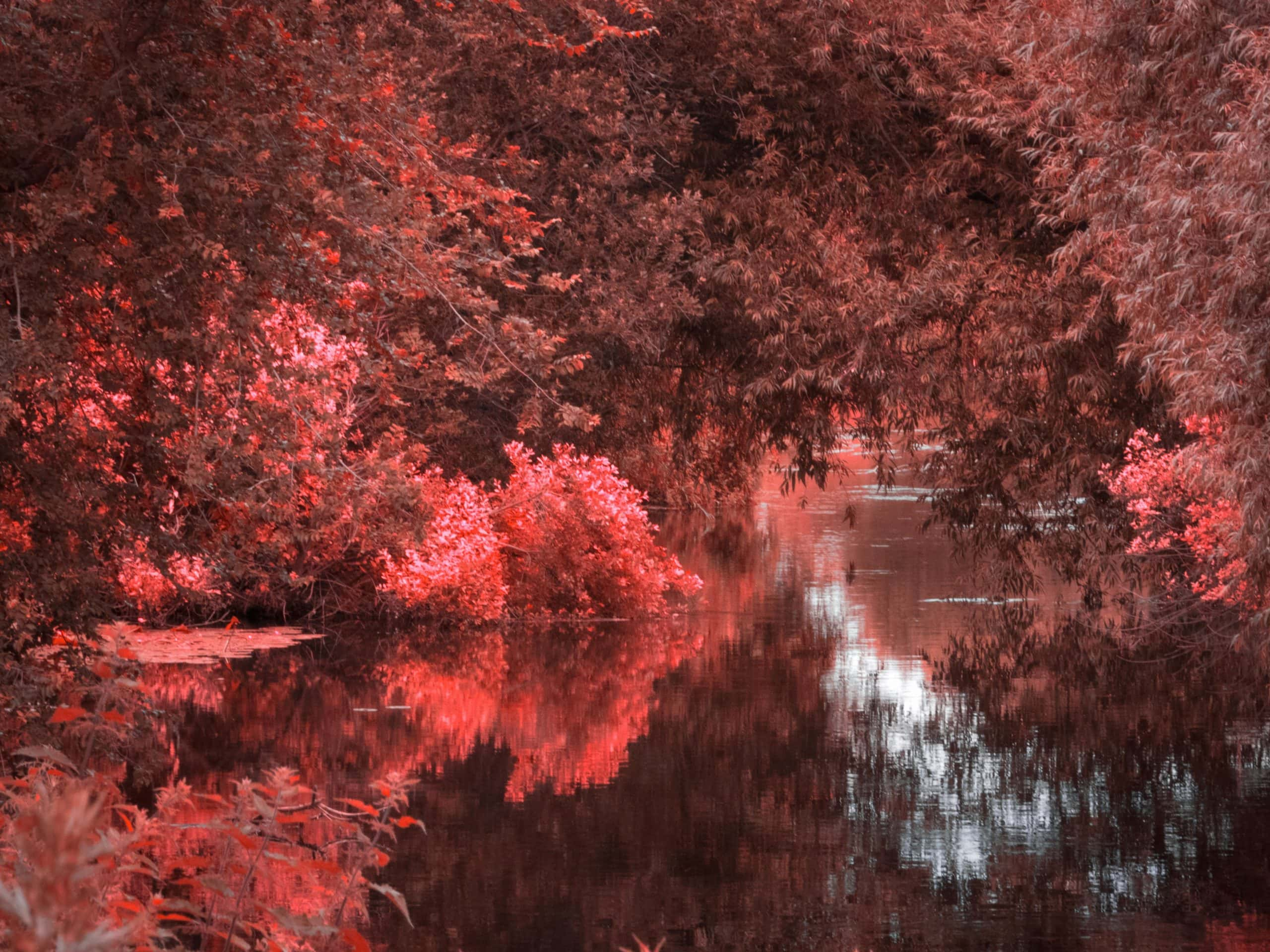 autumn paddle adventures river stour