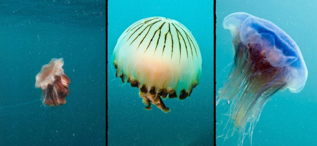 Jellyfish when you paddle