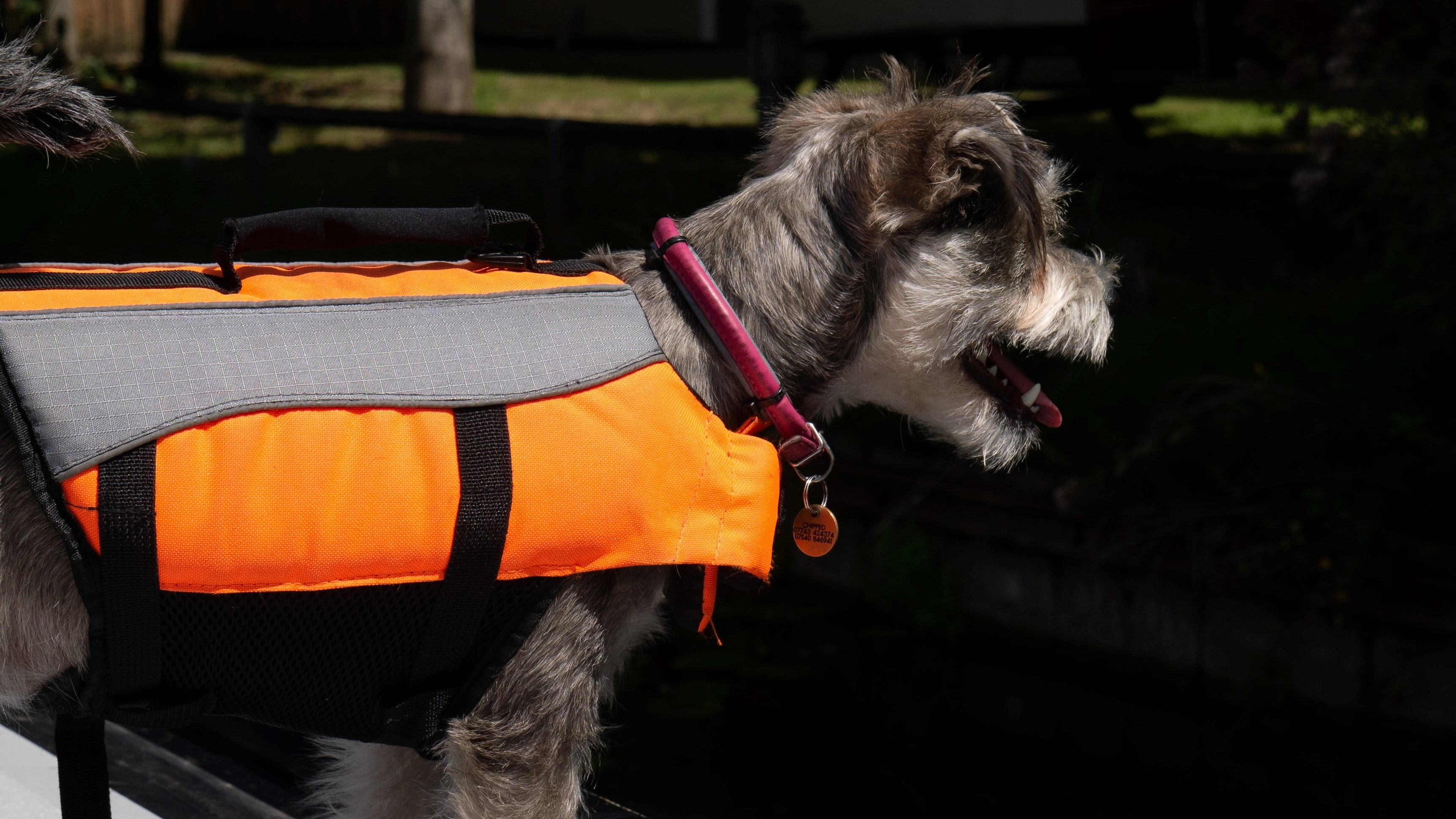 Dog with life jacket ready for paddle boarding