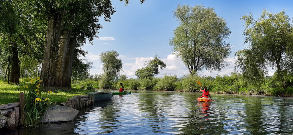 2 kayakers exploring a sheltered section of river